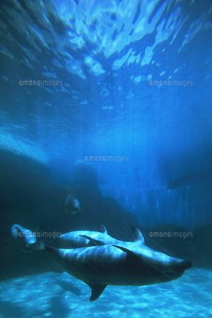 イルカの写真素材 [FYI00206962]