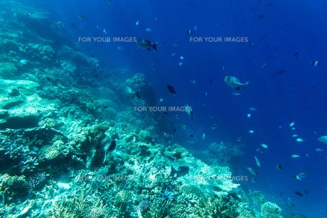 モルディブのサンゴ礁と熱帯魚の写真素材 [FYI00207066]