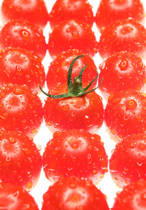 プチトマト 白バック 結露の写真素材 [FYI00207163]