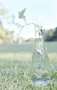 魚 瓶 葉の写真素材 [FYI00207181]