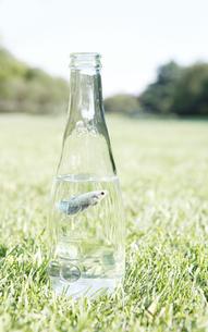 魚 瓶の写真素材 [FYI00207213]