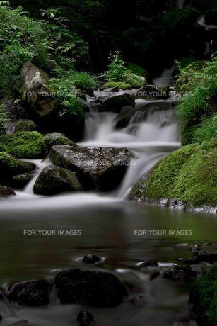 鳥取県鳥取市 雨滝の沢の写真素材 [FYI00207342]
