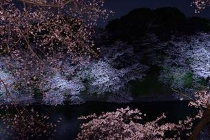 夜の桜の写真素材 [FYI00207372]