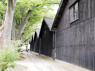 木と石畳と山居倉庫の写真素材 [FYI00207387]