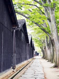 木と石畳と山居倉庫の写真素材 [FYI00207397]