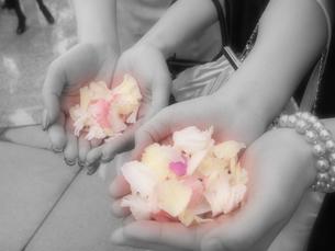フラワーシャワーの花びらの写真素材 [FYI00207401]