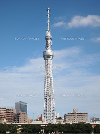隅田公園から見た東京スカイツリーの写真素材 [FYI00207529]
