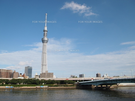 隅田公園から見た東京スカイツリーの写真素材 [FYI00207530]