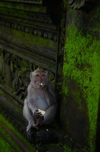 ウブドゥの小猿の写真素材 [FYI00207651]