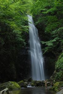 苔の渓流と滝の写真素材 [FYI00207733]