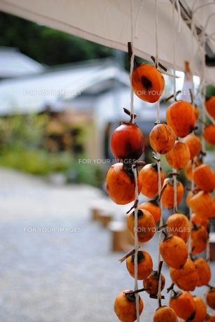 干し柿の写真素材 [FYI00207802]