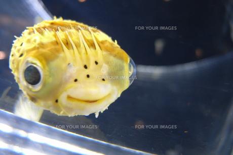 かわいい魚の写真素材 [FYI00207912]