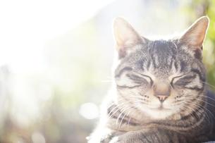 朝日の中で眠りこける野良猫のアップの写真素材 [FYI00207917]