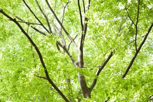 新緑の写真素材 [FYI00207939]