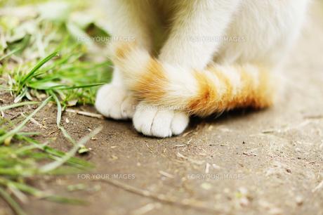 お行儀よくすわる野良猫の足元の素材 [FYI00207941]