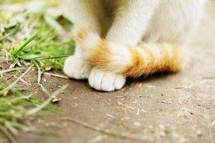 お行儀よくすわる野良猫の足元の写真素材 [FYI00207941]