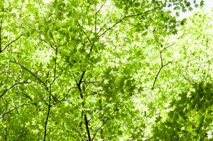 新緑の写真素材 [FYI00207946]