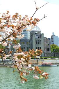 八重桜と原爆ドームの写真素材 [FYI00207972]