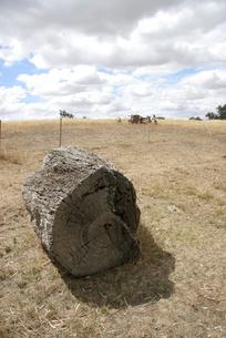 牧草地の写真素材 [FYI00208096]