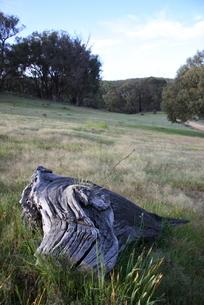 オーストラリア イメージ 農場の写真素材 [FYI00208097]