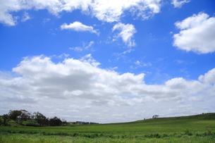 オーストラリア イメージ牧草地の写真素材 [FYI00208098]