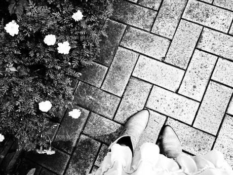 散歩の写真素材 [FYI00208185]