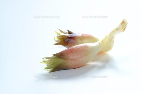 ミョウガの素材 [FYI00208910]