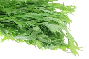 水菜の写真素材 [FYI00209296]