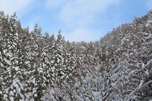 冬の里山の写真素材 [FYI00209601]