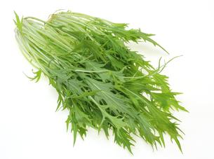 水菜の写真素材 [FYI00209608]