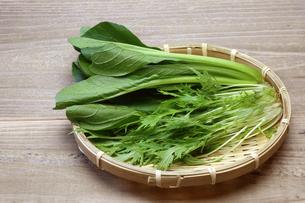 コマツナと水菜の写真素材 [FYI00209644]