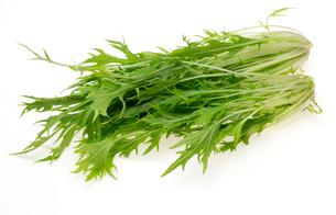 水菜の写真素材 [FYI00209728]