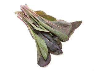 紫小松菜の写真素材 [FYI00209954]