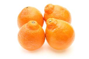 オレンジの写真素材 [FYI00210071]