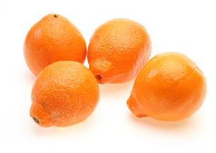 オレンジの写真素材 [FYI00210120]