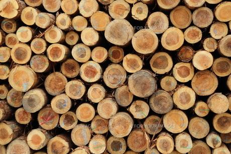材木置き場の素材 [FYI00210138]