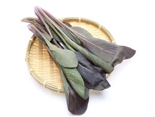 小松菜の写真素材 [FYI00210208]