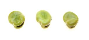 空豆の写真素材 [FYI00210288]