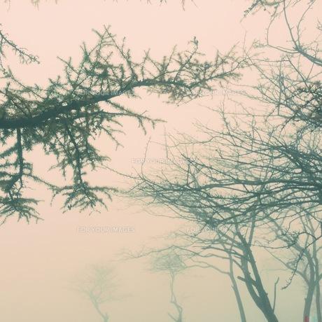霧と木の素材 [FYI00210326]