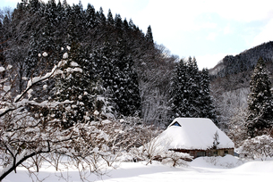 雪の茅葺の写真素材 [FYI00210356]