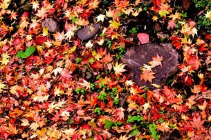 秋の余韻の写真素材 [FYI00210418]