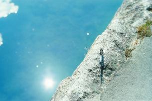 池岸のトンボの素材 [FYI00210484]