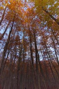 松之山・美人林の秋の写真素材 [FYI00210495]