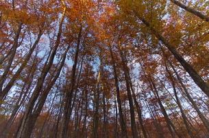 松之山・美人林の秋の写真素材 [FYI00210504]