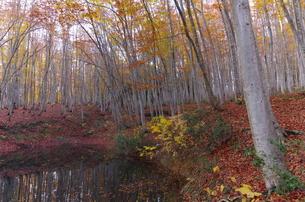 松之山美人林と池の写真素材 [FYI00210517]