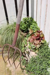 植物と農業フォークの写真素材 [FYI00210550]