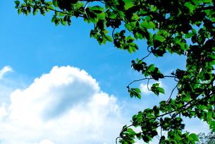 初夏の青空と雲、新緑の写真素材 [FYI00210559]