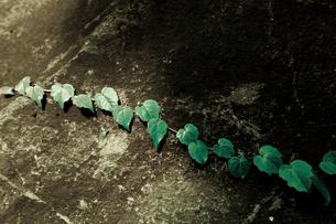 長く連なるハート型の葉っぱの写真素材 [FYI00210562]