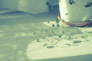 窓際の植物の写真素材 [FYI00210574]