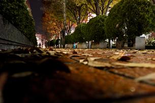 枯葉と並木道の写真素材 [FYI00210580]